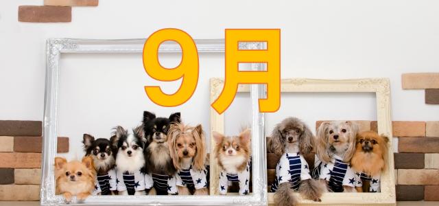 犬 集合 9月