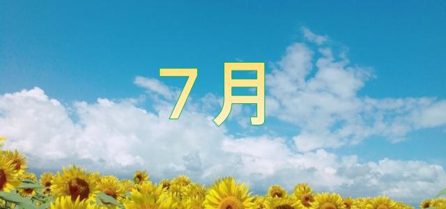 7月 向日葵